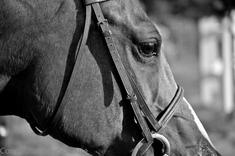horsebetsy