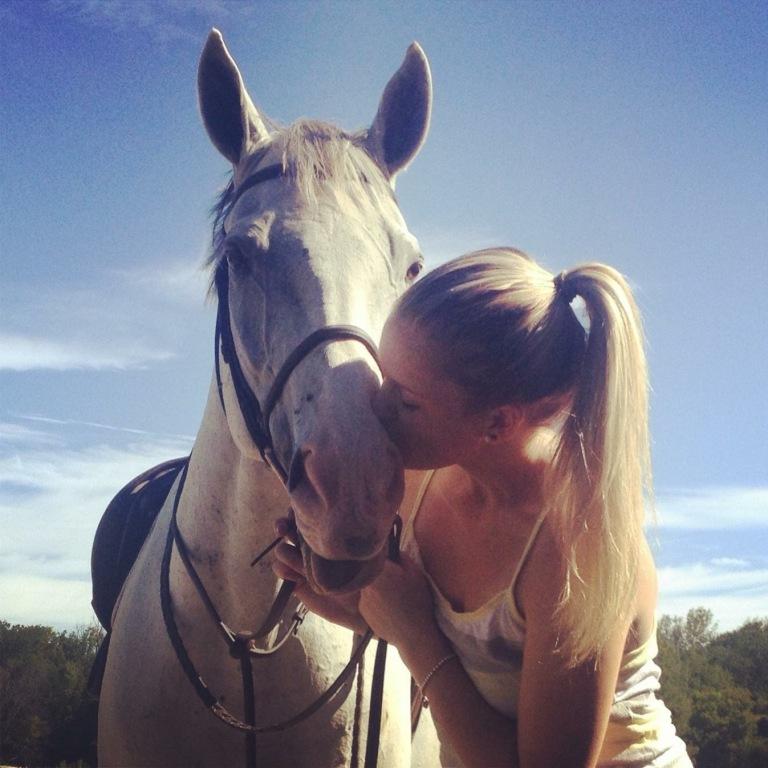 horse percy photo