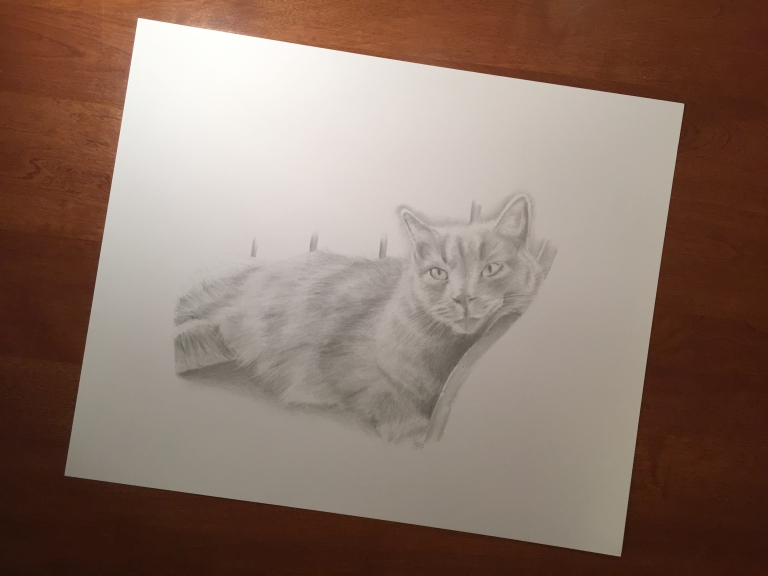 pippin cat drawing full