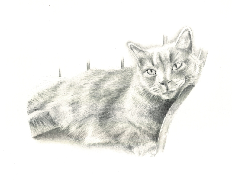 pippin cat illustration cropped