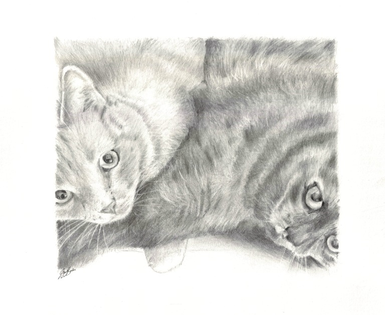 mother son cat drawing steve socha3