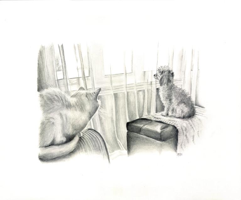 waiting-cat-dog-drawing-main