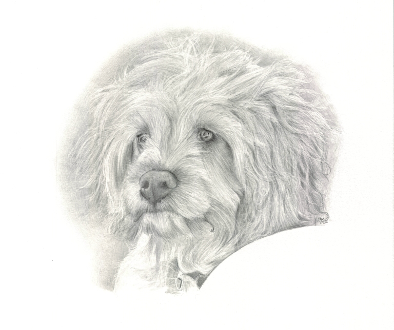 einstein-dog-drawing-main