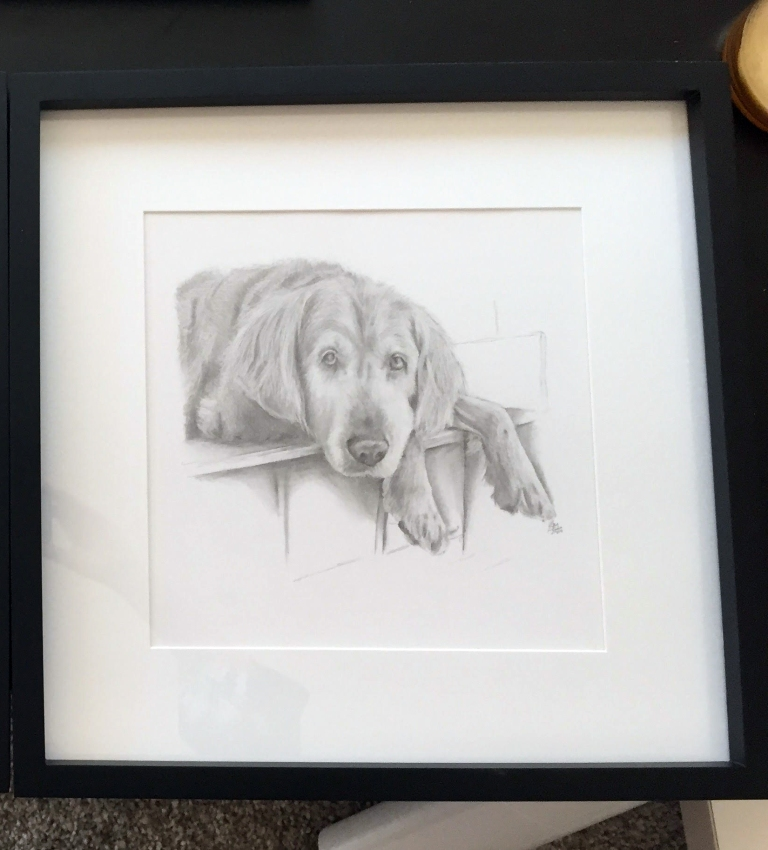 nero dog drawing framed