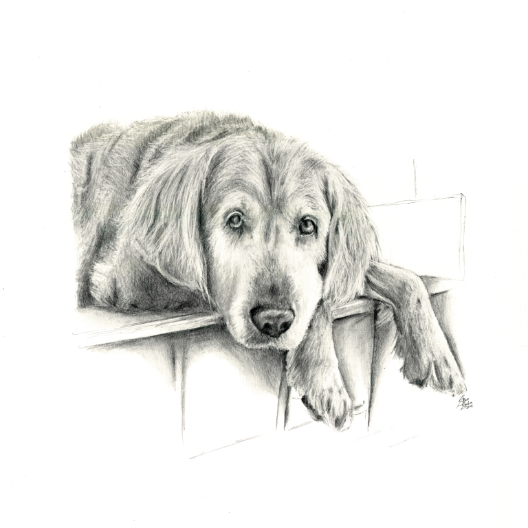 nero dog drawing pet portrait