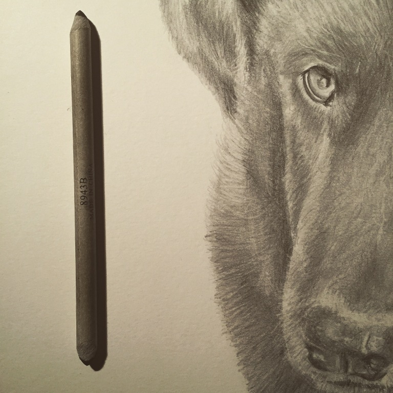 riggs dog drawing zoom in