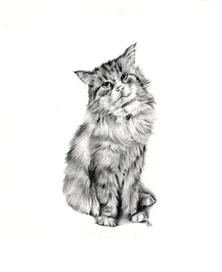 spiff cat drawing