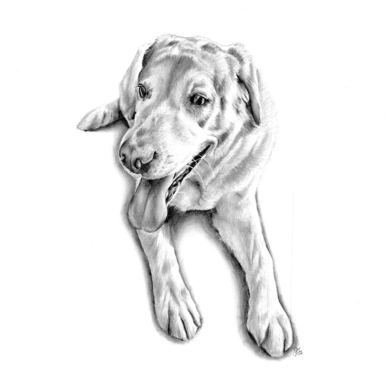 lyla dog drawing main