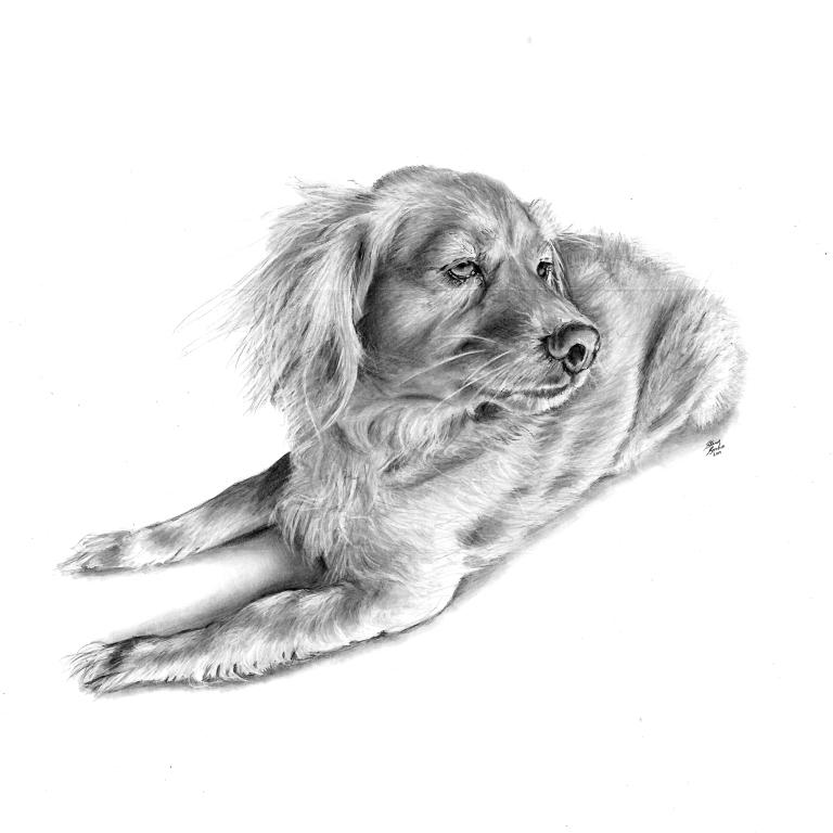 Louie dog drawing main