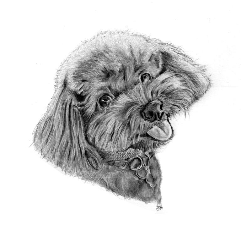penny dog drawing main