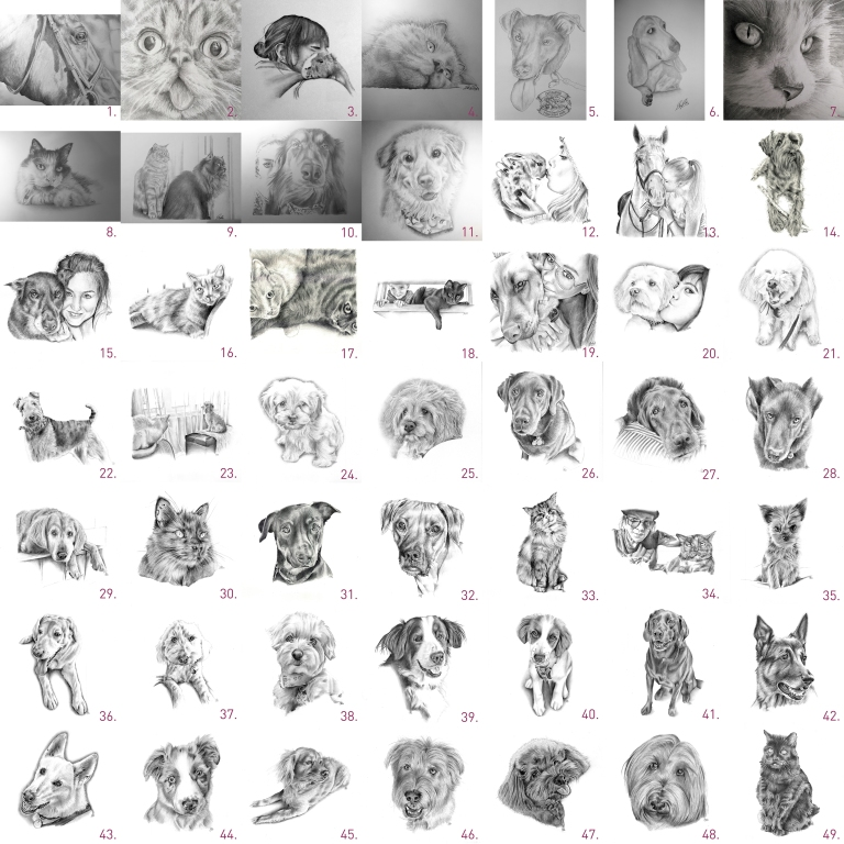 50 pet portraits small