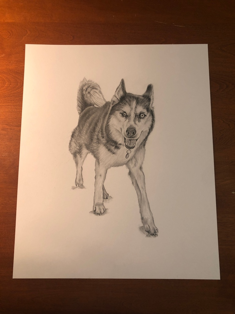 bauer dog drawing table