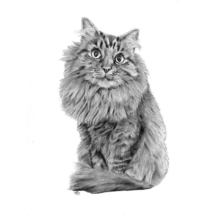 yasmin cat drawing main