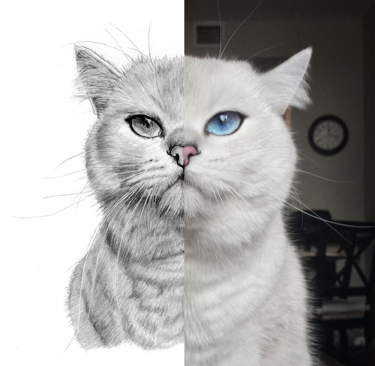 coby the cat split