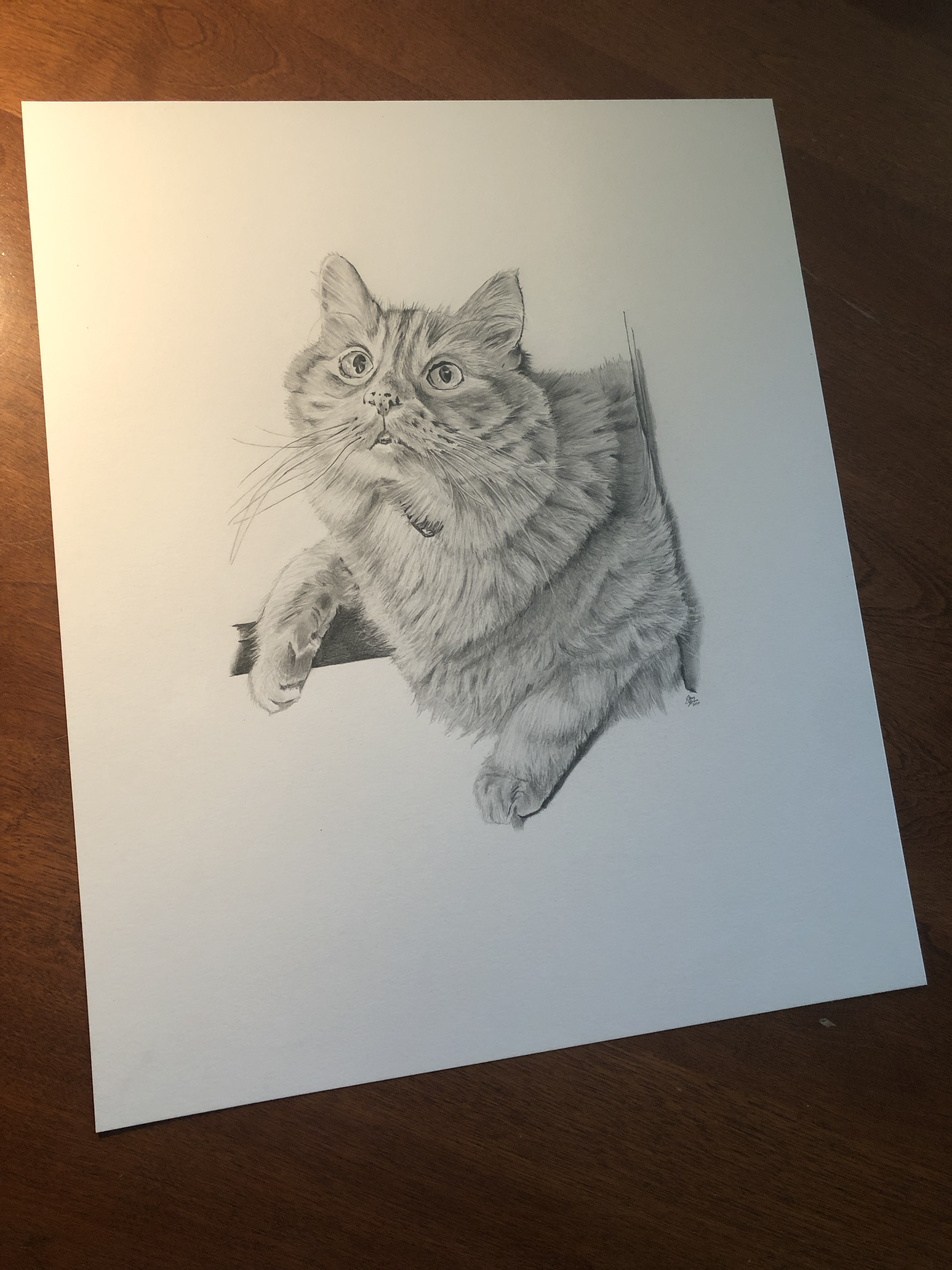 dewey cat drawing on table