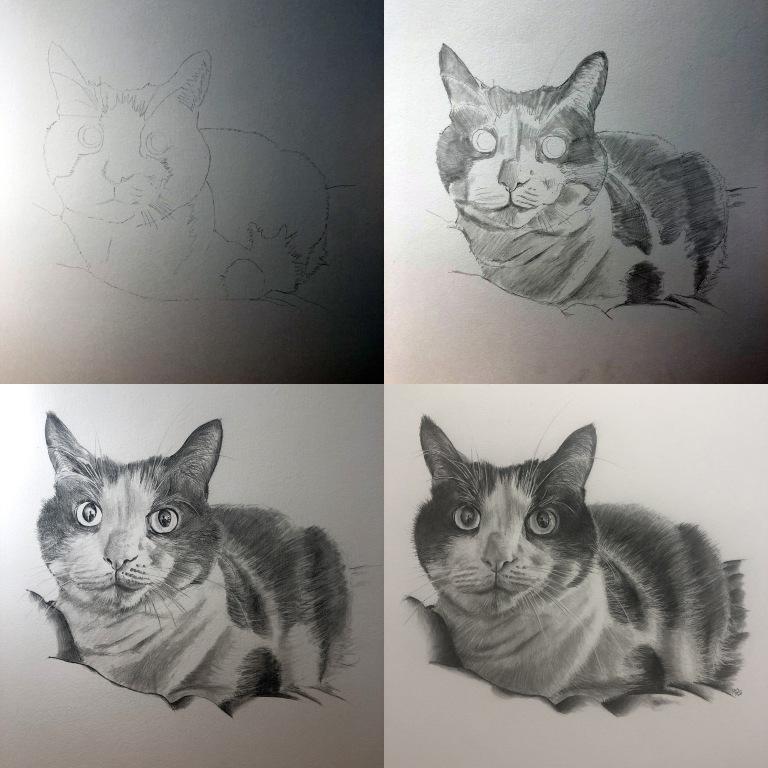 oreo cat drawing process